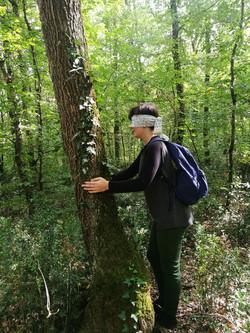 Balade en forêt à l'aveugle