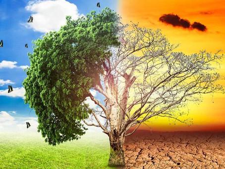 Transformadores secos Vs. En aceite. Evaluación del impacto ambiental
