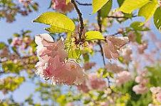 꽃, 봄꽃