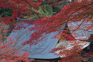 진고지神護寺