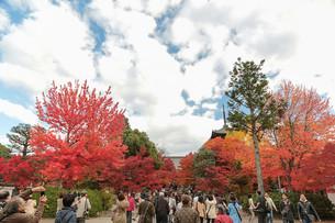 신쇼고쿠라쿠지真正極楽寺(신뇨도真如堂)