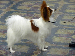 GCH Hallmark's Joan of Arc