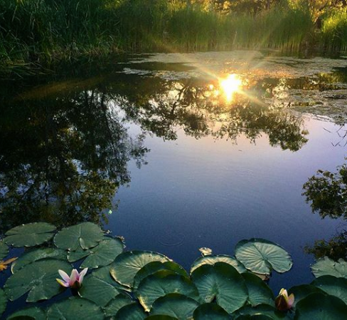 Mesa Del Sol Pond.png