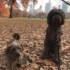 Ellie and Winnie fall for Central Park!_