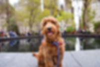 dogpic2 07062019.jpeg