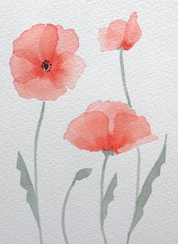 Layered Poppies