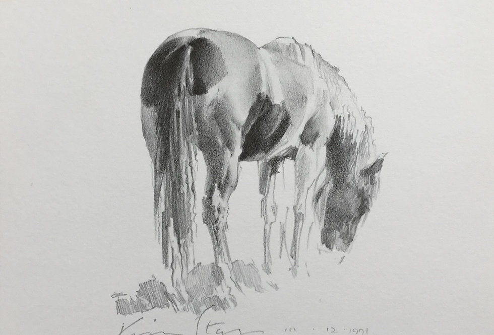 Brown and White Horse drawing