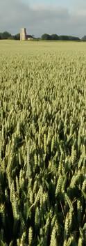 Fields near Grove Stables