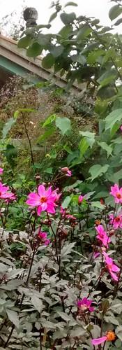 East Ruston Vicarage Gardens