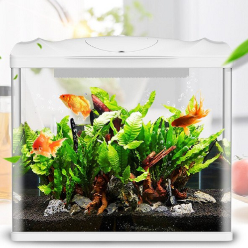 Ecological Fish Aquarium