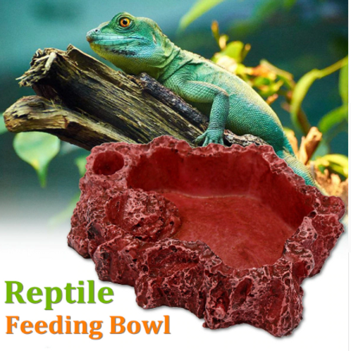 Reptile Feeding Bowl