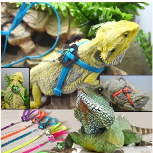 Reptile Harness and Leash