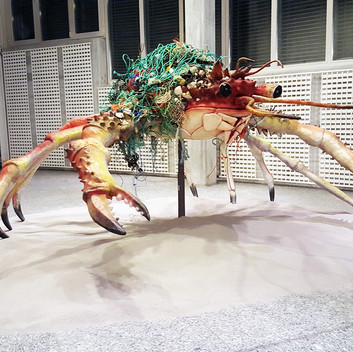 Mark Dion, Decorator Crab, 2016, Installation View, Kunstmuseum St. Gallen