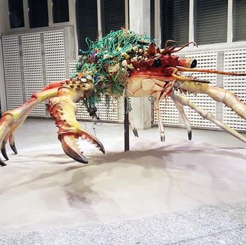 Mark Dion, Decorator Crab, 2016, Installation View, Kunstmuseum St. Gallen