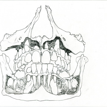 Klara Hobza, Dental growth twelve years, 2019 Pencil on paper, unframed: 29,7x21 cm (A4), framed 33x24.5x3cm