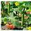 Thumbnail: Klimop net kunststof grofmazig broeikas accessoires plantenclips plantenbinders