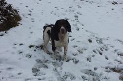 Maverick in the snow