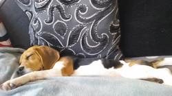 Amber tired pup.jpg