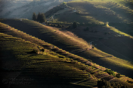 Early Morning in the Vineyard (Douro Valley • Portugal, April 2019)