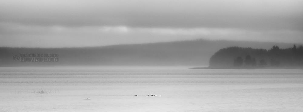 Eleven Divers • Undici Strolaghe