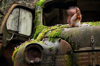 Life in the Graveyard (Squirrel • Värmland, Sweden, November 2018)