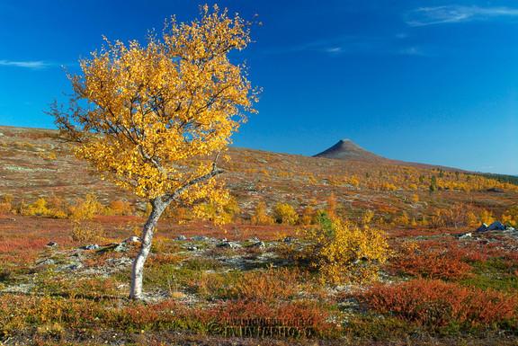 Mount Städjan from Nipfjället