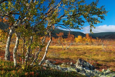 Nipfjället Nature Reserve