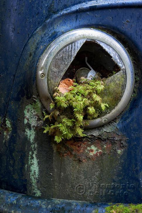 Green Light (Car Graveyard • Värmland, Sweden, November 2018)