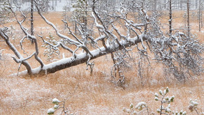First Snow • Prima neve