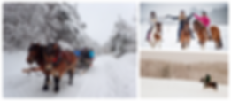 collage-winter horse.png