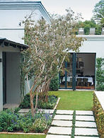 Garden & Home Article Image 02.jpg