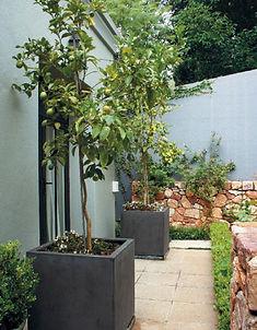Garden & Home Article Image 07.jpg