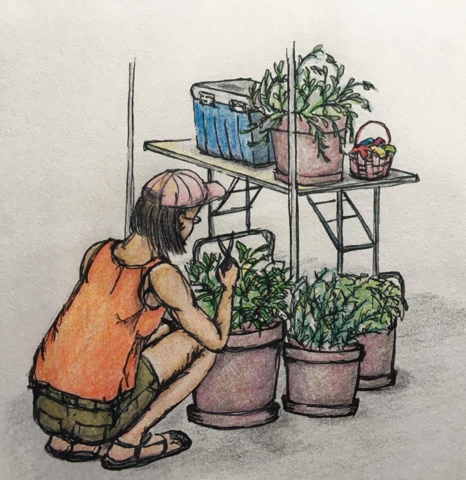 Spongetta's Garden 15 Years Ago