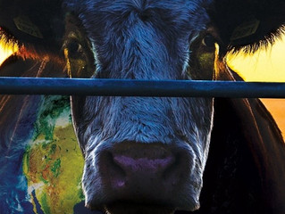 Arci Noerus e Gruppo Vegani di Como/ 19 marzo: Pranzo Vegan e Cowspiracy