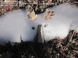 le_petit_peuple_de_la_neige_n°140_(1).jpg