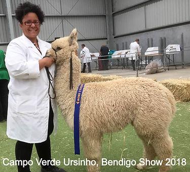 Campo Verde Ursinho Bendigo 2018_edited.