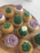 succulent cupcakes.JPG