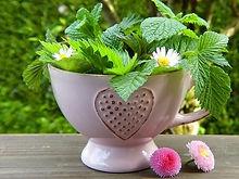herbs-2232640_640_edited.jpg