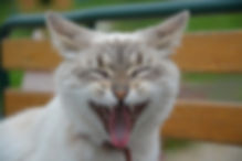 cat-2865806_640.jpg