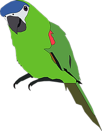 parrot-312291__340.png