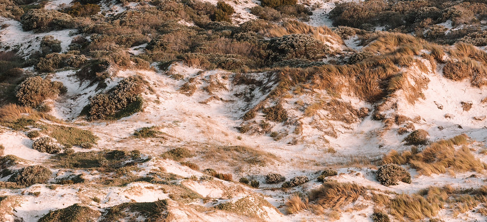 Noordhoek Dunes (1 of 1).jpg