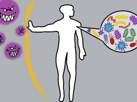 How Your Microbiota Works