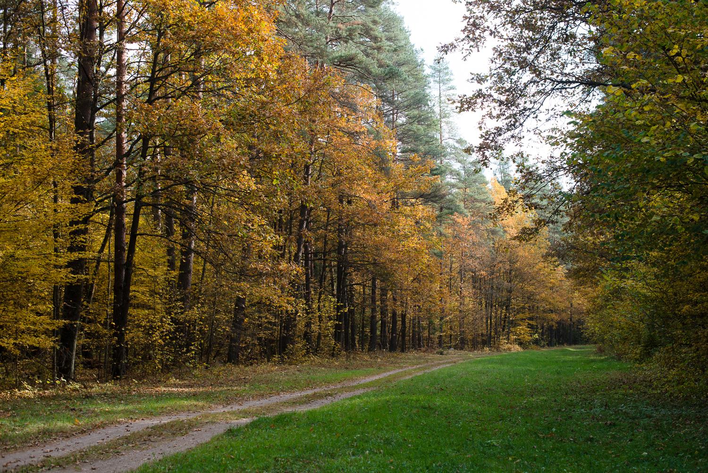 יער ביאלווייז'ה