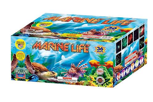 Marine Life - Only $33.17 Per Cake