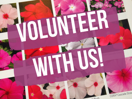 Volunteer Opportunity in Downtown Greenville!