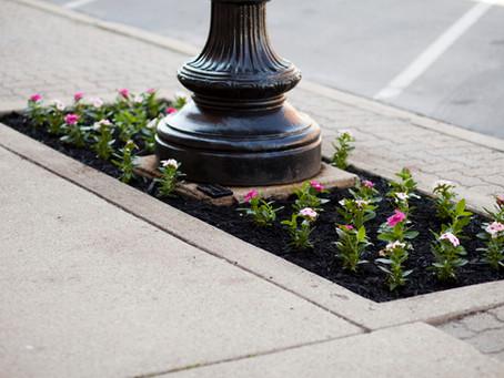 Volunteers Needed to Pull Flowers