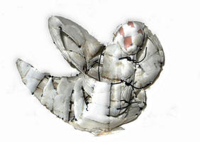 metamorphose ca, 40cm.jpg