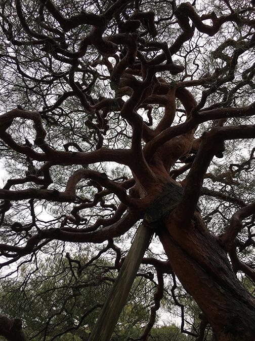 Tree_8216