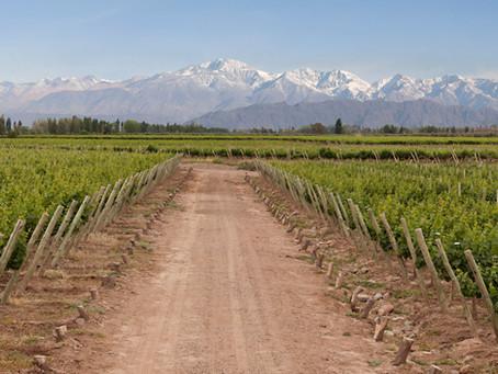 Mendoza, terra del buon gusto