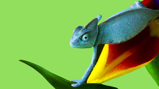 Want to avoid the chameleon effect on new recruits?